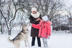 女孩和妈妈在冬天喂养一条多壳的狗 库存图片
