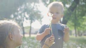 女孩和小男孩吹的蒲公英 美好的逗人喜爱的两childs在绿色自然背景的好日子 影视素材