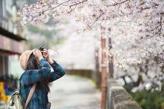 女孩和樱花 免版税库存图片