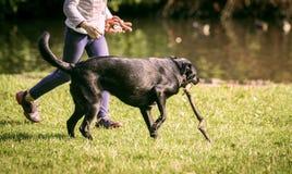 女孩和狗在草 免版税库存照片