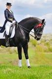 女孩和驯马马 免版税库存图片