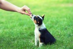 女孩哺养一只小小狗的香肠 库存照片