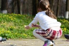 女孩哺养的pegions用面包 免版税库存照片