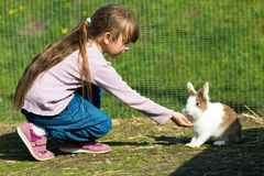 女孩哺养的兔子 免版税库存照片