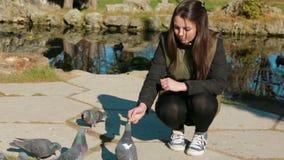 女孩哺养的鸽子在公园 股票视频