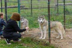 女孩喂养与在铁栅栏的一条狗 免版税库存照片