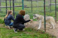 女孩喂养与在铁栅栏的一条狗 免版税库存图片
