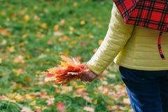 女孩在公园收集秋天槭树叶子 免版税库存图片
