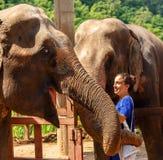 女孩在圣所的爱抚两大象在清迈泰国 免版税库存照片