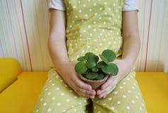 女孩在她的手上坐与一棵多汁植物 种植植物 春天 欢乐复活节 免版税库存照片