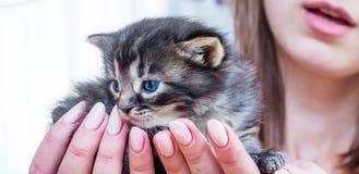 女孩在她的手上拿着与蓝眼睛的一只美丽的小猫 M 免版税库存图片