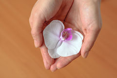 女孩在她的手上拿着花兰花 免版税库存图片