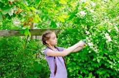 女孩在庭院里帮助切开在灌木的枝杈 库存照片