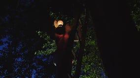 女孩在晚上爬上在树的木台阶 影视素材