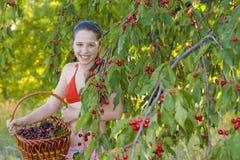 女孩在有一个甜樱桃篮子的庭院里 库存照片