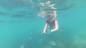 女孩在有鱼的海沐浴 在面具的佩戴水肺的潜水 Phangan,泰国 影视素材