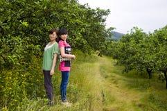 女孩在柑橘果树园 库存照片