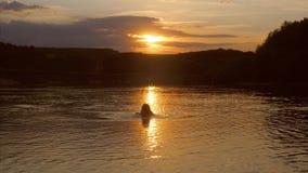 女孩在水中站立并且看日落 股票录像