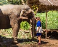 女孩在清迈密林照顾在一个圣所的一头大象 免版税图库摄影