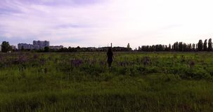 女孩在羽扇豆中花的领域走  股票视频