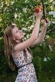 女孩在苹果树 库存照片
