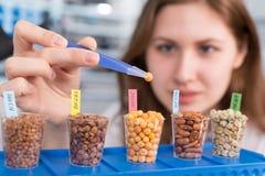 女孩在食物实验室测试豆类五谷 免版税库存照片