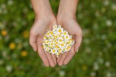 女孩在他的手上的拿着一朵雏菊 免版税图库摄影