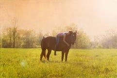 女孩她的马 免版税库存图片