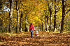 女孩姐妹在森林公园在秋天走 免版税库存图片