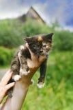 女孩小猫一点 库存图片
