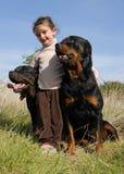 女孩小的rottweilers 免版税库存照片