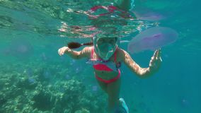 女孩少年游泳在紫色水母中的红海在潜航的一个正面面具 接触水母 股票视频