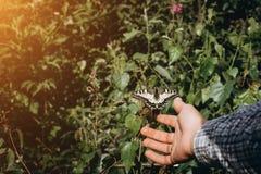 女孩手和飞行的蝴蝶反对绿色春天背景 免版税库存照片