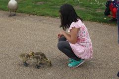 女孩护理鸭子 库存图片