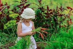 女孩拉扯从庭院的一棵红萝卜 免版税图库摄影
