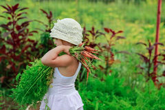 女孩拉扯从庭院的一棵红萝卜 库存照片