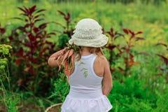 女孩拉扯从庭院的一棵红萝卜 库存图片