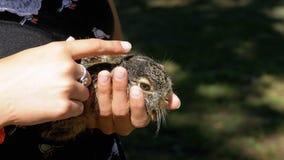 女孩拿着一个小狂放的蓬松婴孩兔宝宝 在棕榈的一点兔宝宝 影视素材