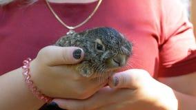女孩拿着一个小狂放的蓬松婴孩兔宝宝 在棕榈的一点兔宝宝 股票视频