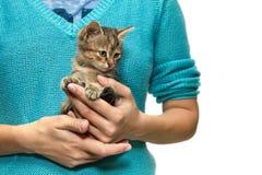 女孩拿着一只小猫 库存照片