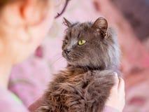 女孩拿着猫,喜爱的宠物 喜欢animals_ 免版税图库摄影