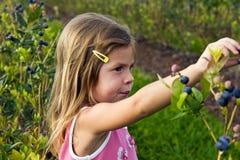 女孩挑选蓝莓 免版税图库摄影