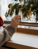 女孩接触开花的分支用手 淫荡春天绽放  接触自然纤巧  嫩女孩` s手 温暖和 库存图片
