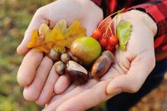 女孩握她的在秋叶、橡子、莓果和榛子的手 免版税库存图片