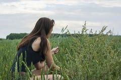 女孩收获在领域的麦子小尖峰 库存图片