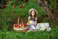 女孩收获庭院树红色桃红色帽子篮子采摘苹果绿草背景 免版税库存图片