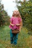 女孩收获庭院树红色桃红色篮子采摘苹果绿草背景一 免版税库存照片