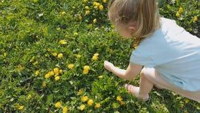 女孩收集在草坪的花 影视素材