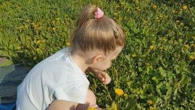 女孩收集在草坪的花 股票录像