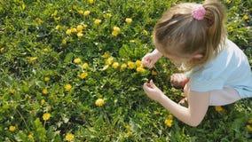 女孩收集在草坪的花 股票视频